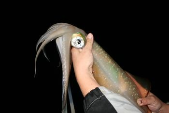 какая рыба клюет на кальмара