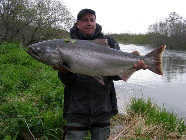 Рыбалка - камчатка - 1