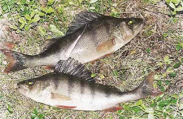 рыбалка озеро павловское тверской
