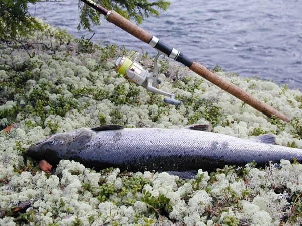 рыбалка на реке соминка